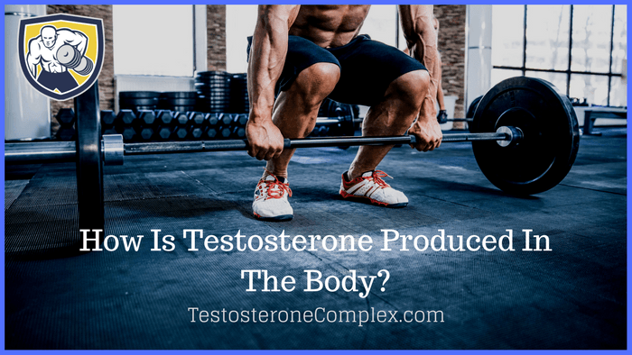 How Is Testosterone Produced In The Body- TestosteroneComplex.com